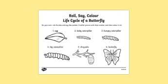 Life Cycle Of A Butterfly Roll Say Colour (Minibeasts) - minibeast, life cycle