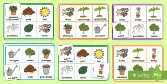 Gêm Bingo Loto Planhigion a Thyfiant  - bingo, lotto, growth, plants, planhigion, tyfiant, bingo, loto,Welsh