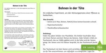 Bohnen in der Tüte Anleitung für Lehrkräfte -  Frühling, Jahreszeiten, Vorschule und Kindergarten, 1./2. klasse, Pflanzen, Wachstum, Experiment,
