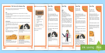 KS2 Pet Care of a Guinea Pig Differentiated Fact File - KS2, comprehension, reading, reading comprehension, reading activity, guinea pig, guinea pigs, looki