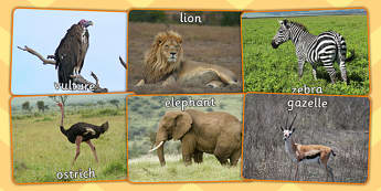 African Animals Display Photos - topic, geography, nature, science, KS1, Key Stage 1, pictures, photographs