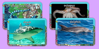 Sea Creature Display Photos Polish Translation - ocean, underwater, sea, sea creatures, seaside, animals, fish, shark, seahorse, photos, pictures, images, display, Polish, Poland, EAL, bilingual
