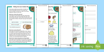KS1 How to Look after a Guinea Pig Differentiated Reading Comprehension Activity - Pets, pet, EYFS, KS1, take, care, look, after, family, member, members, vet, vet surgery, surgery, i