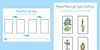 Potato Life Cycle Activity Sheet - life cycles, worksheet, activity sheet, potato, order, sequence