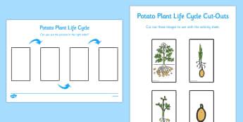 Potato Life Cycle Activity Sheet - life cycles, worksheet, activity sheet, potato, order, sequence