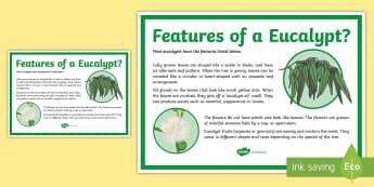 Features of a Eucalypt Tree Display Poster - eucalypt, eucalyptus, Australian plants, gumtree, gum trees, gumnut, gum nuts, ACSSU072, Australian