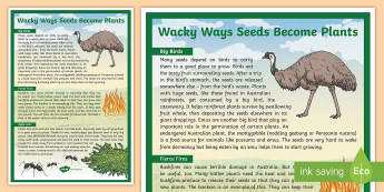 Wacky Ways Seeds Become Plants Display Poster - germination, plant life cycle, lifecycle, seedling, seed dispersal, plant distribution, seed movemen