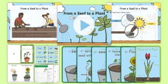 Life Cycles of Plants Early Childhood Resource Pack - Early Childhood Plants, Pre-K Plants, Plants, Pre-Kindergarten Plants, K4 Plants, 4K Plants