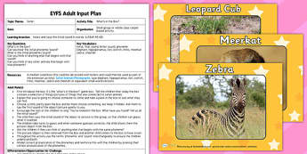 Safari Themed What's in the Box EYFS Adult Input Plan and Resource Pack- plans