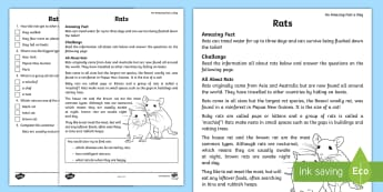 Rat Reading Comprehension Activity Sheet - Amazing Fact Of The Day, activity sheets, powerpoint, starter, morning activity, May, comprehension,
