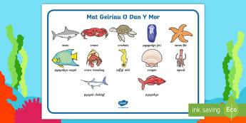 Mat Geiriau O Dan Y Mor - pysgodyn, fish, crank, crab, pysgodyn jeli, jellyfish, seren for, starfish, shell, cragen, angel fis