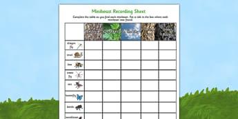 Minibeast Hunt and Location Recording Sheet - minibeasts, hunt