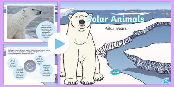 KS1 Polar Bear Fact File PowerPoint - The Arctic, Polar Regions, north pole, south pole, explorers, polar bear, fur, white, camouflage, Ar