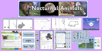 Nocturnal Animals KS1 - Nocturnal animals, resources, activities - Nocturnal Animals KS1 - Nocturnal animals, resources, activities, lesson