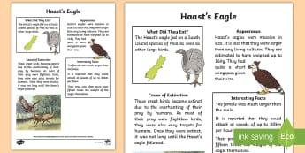 NZ Extinct Birds Haast's Eagle Fact Sheet - Aotearoa, native birds, extinct, Year 1-3, birds, fact file, Haast's eagle