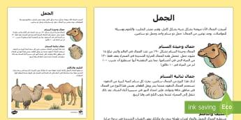 معلومات وحقائق عن الجمل  - الحيوانات، الجمال، الجمل، عربي، علوم، مواطم الحيوان،