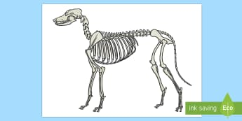 Dog Skeleton Cut-Outs  - Dog Skeleton Cut Out - body, animal, dog, flaps, labels, names, tags, ks2, key stage 2, ks1, early y