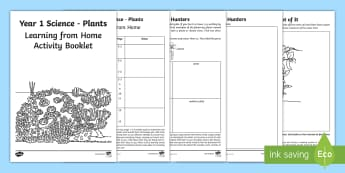 Year 1 Science Learning from Home  Activity Booklet - worksheets, plants, flowers, deciduous, evergreen, activities, outside, outdoor learning