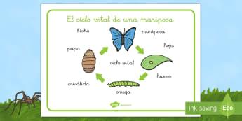 Tapiz de vocabulario: El ciclo vital de la mariposa - libélula, abeja, caracol, hormiga, típula, escarabajo, mariposa, oruga, gusano, mariquita, cochini