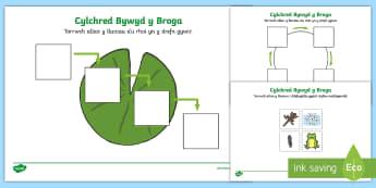 Taflen Weithgaredd Cylchred Bywyd y Broga - Cylchred bywyd y broga, Cylch bywyd, broga, Broga, Frog, Frog Life cycle, lifecycle, worksheet, tafl