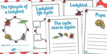 Ladybird Life Cycle Workbook - Ladybird, life cycle, Minibeasts, workbook, knowledge and understanding of the world, investigation, living things, snail, bee, ladybird, butterfly, spider