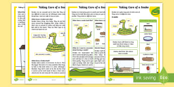 KS1 How to Look After a Snake Differentiated Fact File - Pets, pet, EYFS, KS1, take, care, look, after, family, member, members, vet, vet surgery, surgery, i
