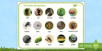 Gli insetti del giardino Vocabolario Illustrato - gli, insetti, del, giardino, animaletti, nomi, vocaboli, colori, colroato, italiano, italian, materi