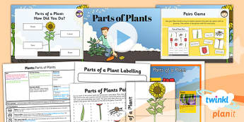 PlanIt - Science Year 3 - Plants Lesson 1: Parts of Plants Lesson Pack