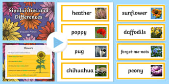 Similarities and Differences Discussion Cards and PowerPoint - similarities and differences, similarities and differences powerpoint, we are all different