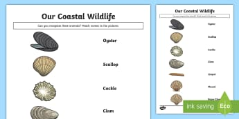 Our Coastal Wildlife - Shells Match and Draw - Science Week, 10/03/17, shells, coast, sea, ocean, clam, World Around Us.
