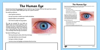 Human Eye Drawing Activity Sheet - eye, iris, human eye, drawing, activity, worksheet