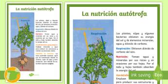 Póster DIN A4: La nutrición autótrofa  - Los seres vivos, La célula, niveles de organización de la vida, clasificación de los seres vivos,