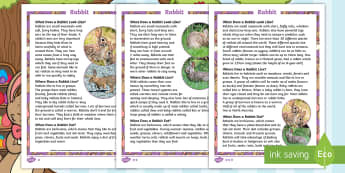 KS1 Rabbits Differentiated Fact File - Children's Books, story, book, Easter, save, saving, Easter Bunny, bunny, bunnies, stories, chick,