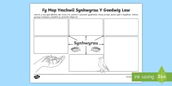 Fy Map Ymchwil Synhwyrau Y Goedwig Law - WL Social Media Requests in Welsh FP (HIGH PRIORITY), Map Ymchwil, Map Ymchwil Synhwyrau, Y Goedwig