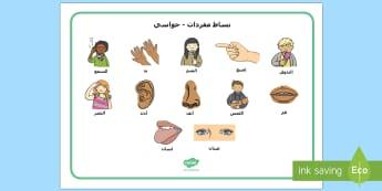 بساط مفردات أعضاء الحواس الخمس  - العلوم، مفردات الحواس،الحواص الخمس، أعضاء الحواس، عرب