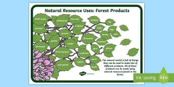 Forest Products Display Poster - natural resources, natural materials, properties of materials, earth's resources, tree uses, wood p