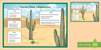 Cactus Plant Adaptation Display Poster - science, living world, plants, UAE, adaptation, poster, display, roots, stem, leaves, desert, classr
