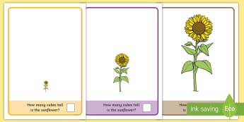 Sunflower Measuring with Cubes Activity Mat - EYFS, Early Years, KS1, Key Stage 1, sunflower, spring time, Maths, size, height, measure, measureme