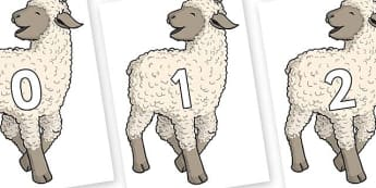 Numbers 0-31 on Lamb - 0-31, foundation stage numeracy, Number recognition, Number flashcards, counting, number frieze, Display numbers, number posters