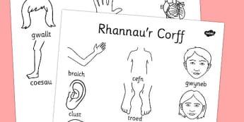 Rhannau'r Corff Dictionary Colouring Sheet Cymraeg - welsh, cymraeg, my body, dictionary, colouring, sheet