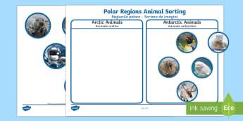 Polar Regions Animal Sorting Activity English/Romanian - The Arctic, Polar Regions, north pole, south pole, explorers, orca, whale, penguin, polar bear, anta