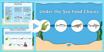 Under the Sea Food Chains PowerPoint