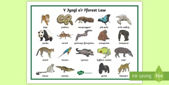 Mat Geiriau Y Jyngl a'r Fforest Law - Fforest Law, Coedwig, Glaw, Amason, Fforestydd, Yssgrifennu, Perswadiol, Sbardun, Daearyddiaeth, Ama
