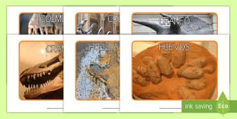 Fósiles de dinosaurios Fotos de exposición - Dinosaurios, pre-historia, dinos, tyranosaurio, estegosaurio, triceratops, proyectos, aprendizaje ba