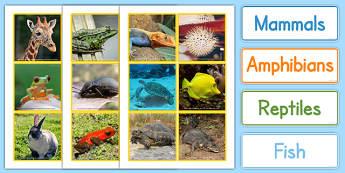 Animal Groups Sorting Cards Photos - animal, groups, sort, cards