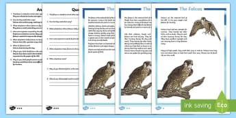 Falcon Differentiated Reading Comprehension Activity - Science: Living World, falcon, reading, comprehension, fact file, activity sheet, Arabian animals, U - Science: Living World, falcon, reading, comprehension, fact file, activity sheet, Arabian an