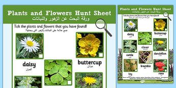 Plants and Flowers Hunt Sheet Arabic Translation - arabic, Plants hunt, flowers hunt, investigation, finding plants, Plant growth , knowledge and understanding of the world, investigation, living things, snail, bee, ladybird, butterfly, spider
