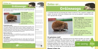 Gráinneoga Léamhthuiscint - Translations to Ulster Irish and Gaeilge, nocturnal animals, hedgehog, hedgehogs, comprehension, ain