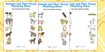 Animals and Their Young Matching Worksheets - match, animals