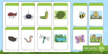 Tarjetas de emparejar: Los bichos y sus hábitats - libélula, abeja, caracol, hormiga, típula, escarabajo, mariposa, oruga, gusano, mariquita, cochini